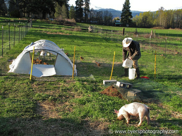 Mt Hood Chicken Farms